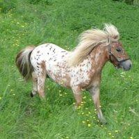 Des chevaux a vendre!!!