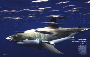Make our dream come true: Let sharks lives in peace please...