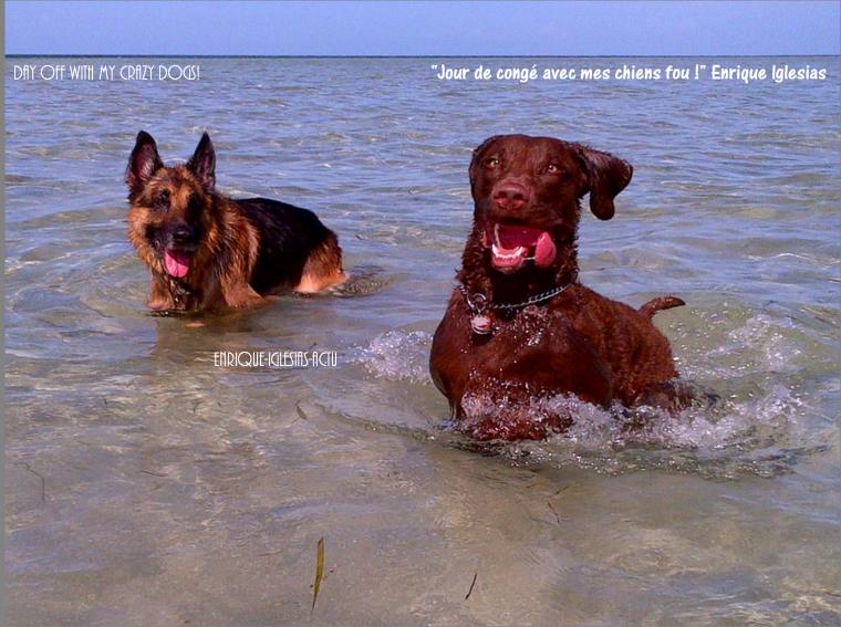 #mycrazydogs