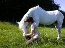 Photo de Xx-Paradis-of-horses-xX