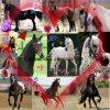 <3 l'amour des chevaux <3