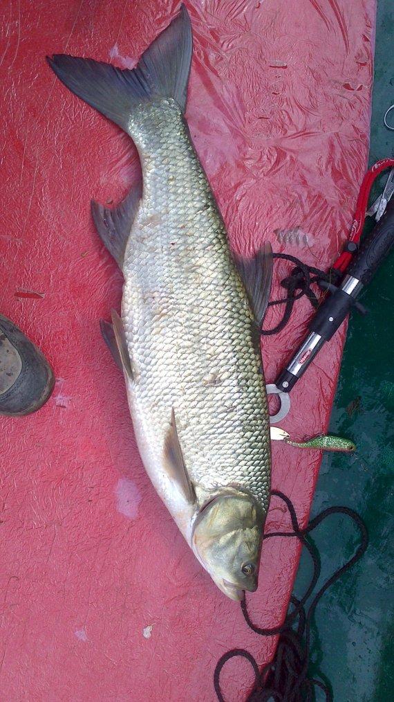 la pêche de samedi matin