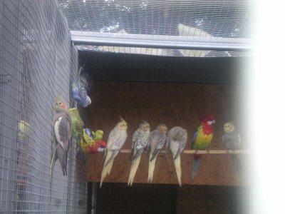 bienvenue chez denis amateur d oiseau le blog a 10 pages clic en bas sur suivant pour voir les autre page