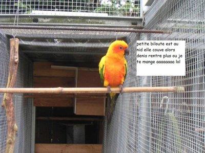 la femelle est au nid............