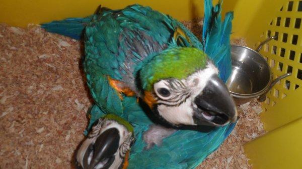 ararauna 2014 dispo  EAM  propre élevage B14 ......