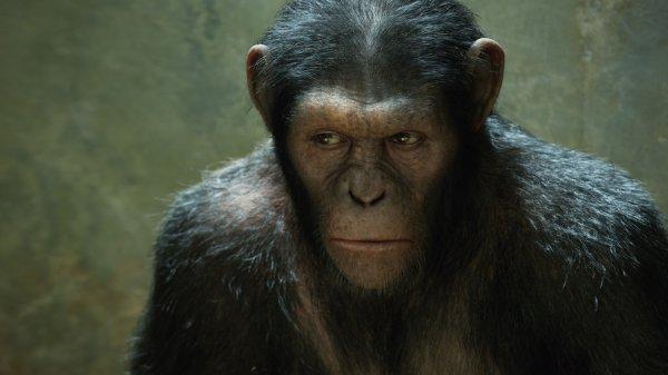 La planete des singes:les origines