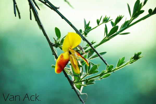 La passion florale.