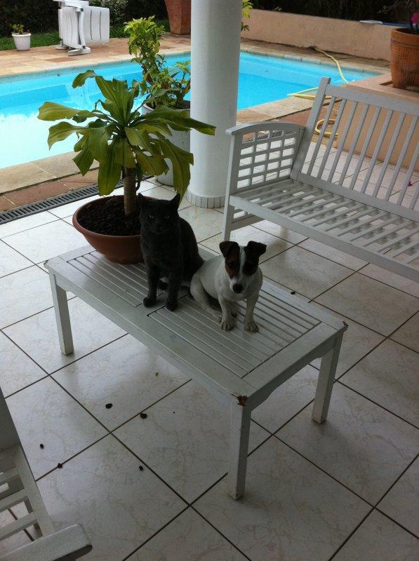je rend hommage a mon chat et mon chien