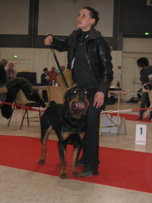 expo TROYES 2011 un juge aux critères trop personnels !!!!!