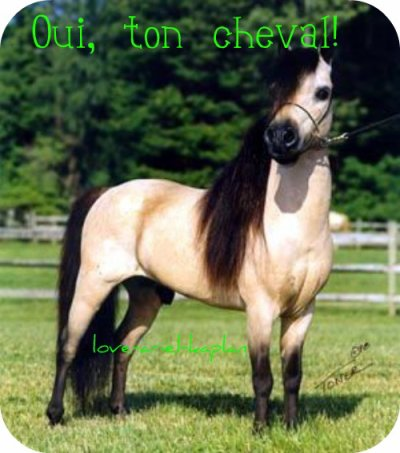 Ton cheval