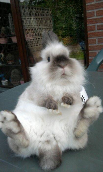 ♥ Bijou ( mon lapin ) ♥