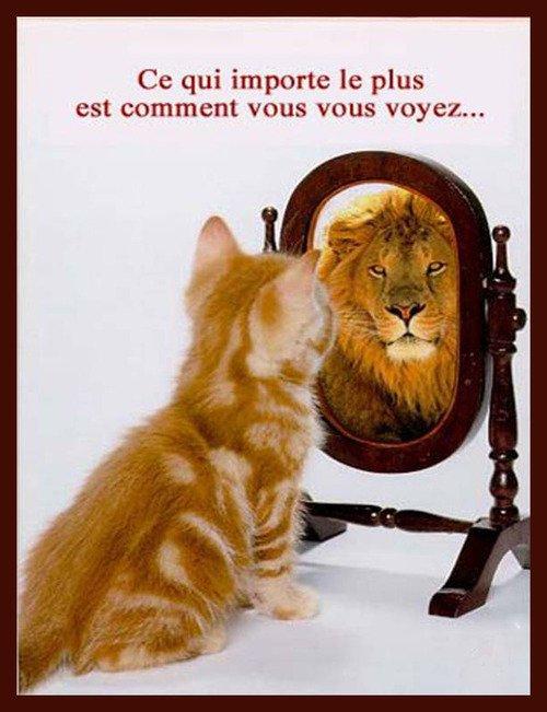 se regarder dans le miroir a dream but a life