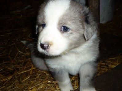 mon petit chien