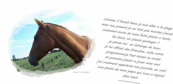 """j'ai toujours entendu dire """"l'homme murmure a l'oreille des chevaux"""" mais je suis persuadé du contraire"""