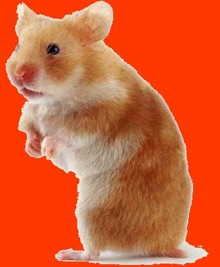 J'ai toujours voulu un Hamster grace a Hamtaro