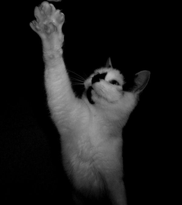 Mon chat <3