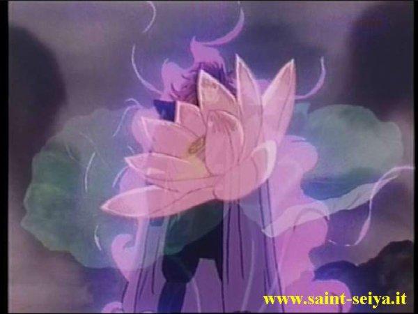 Lotus Agora