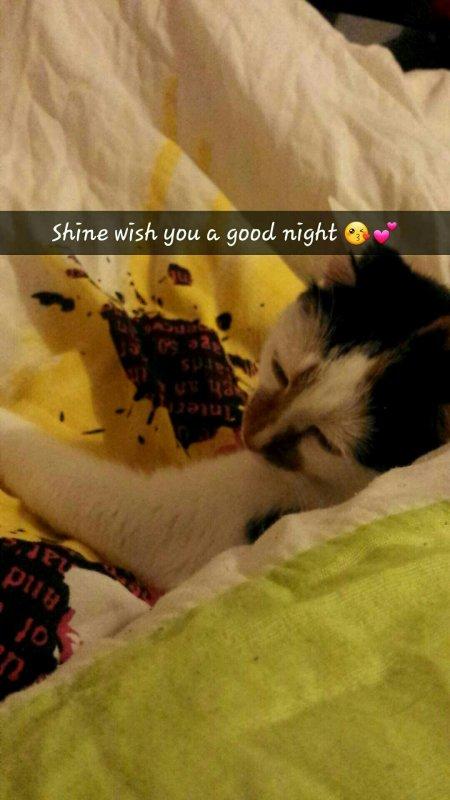 ~ Bonne nuit y'all ♥