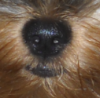 My-dream-dog