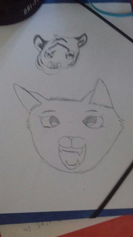 dessin tigre et chat