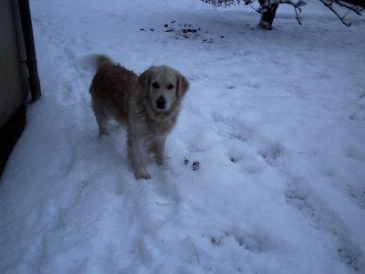 voila mes chiennes entrai nde jouer dans la neige du 2,3 decembre2010