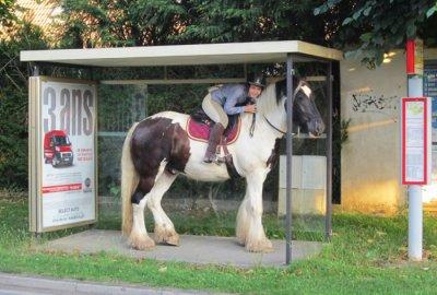 Et un abri de bus trop petit !