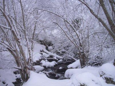 Petite sortie dans la neige!!