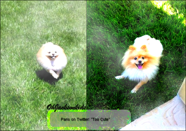 Paris Jackson- Twitter Pictures of a family dog.
