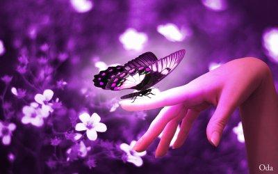 Chaque fois qu'un enfant dit « je ne crois pas aux fées », il y a quelque part une fée qui meurt.