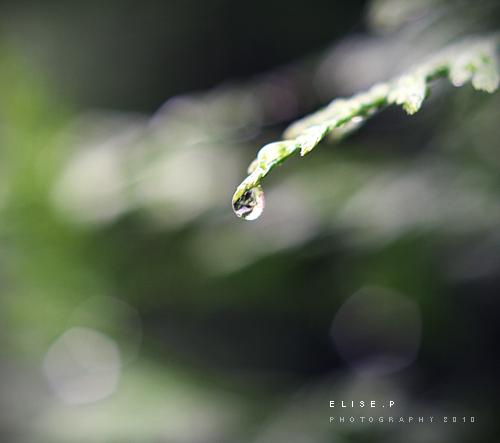 . . Raindrop . .