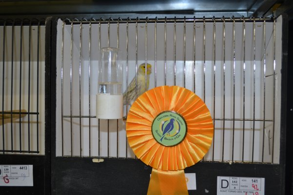 Goudenringshow 2012