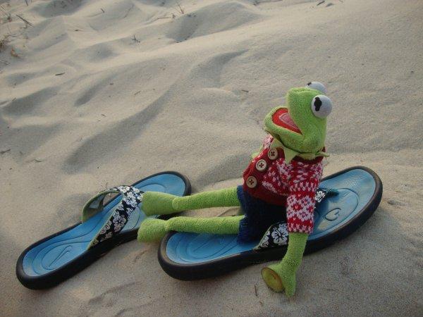 KERMIT, esseulé sur une plage....