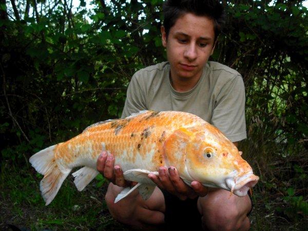 Session ;; Que des beaux poissons