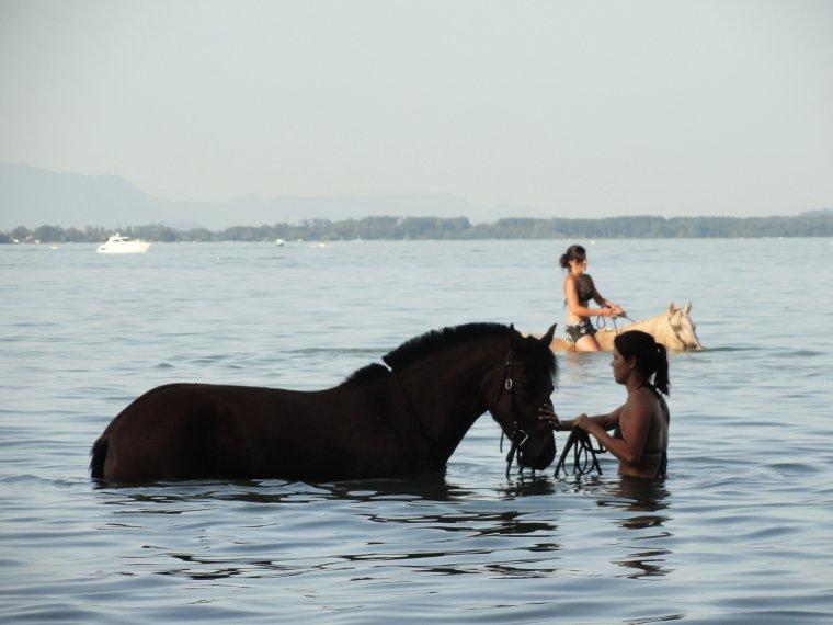 Petit souvenir du lac cet été !