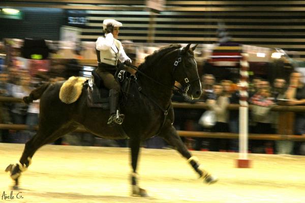 Equita'Lyon 2012