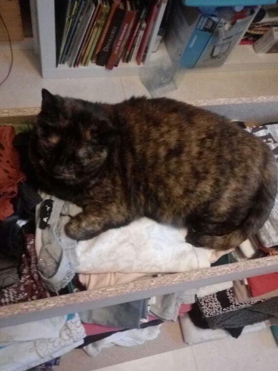 Le nouveau lit de mon chat XDD