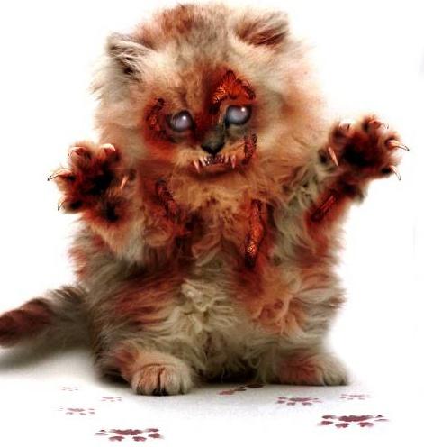 à laide un chat zombie