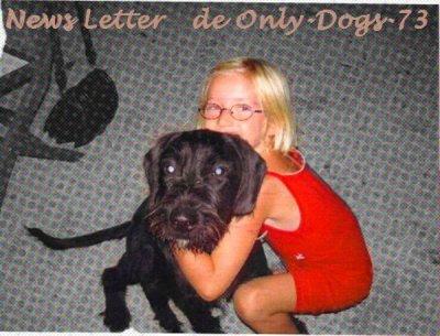 News-Letter de WonderfulDog