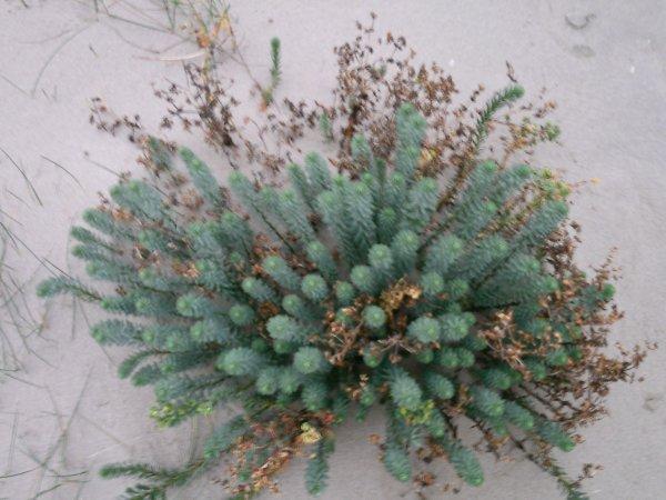 petite plante de dunnes............