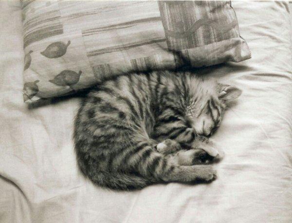 Petit chat que j'aime.