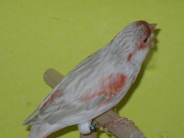 Bruin Opaal Rood Mozaiek