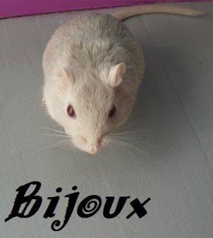 Pixel  & Bijoux