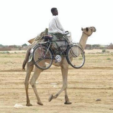 Vélo ou chameau ?