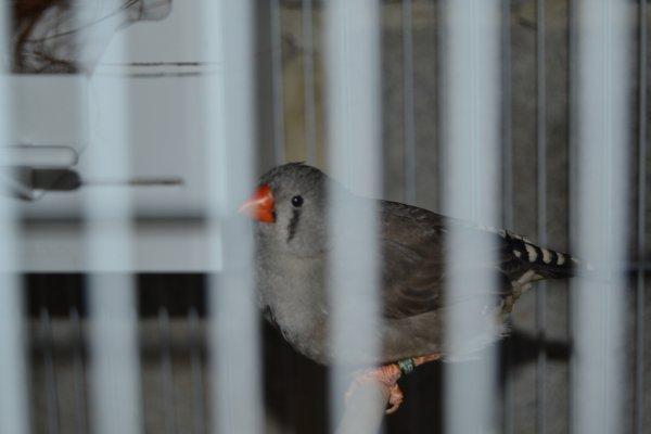 Couple gris x grise blackface