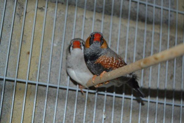Couple gris blackface x dos pâle grise pastel