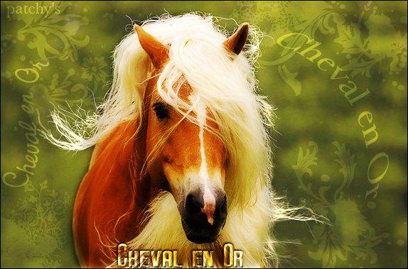 """"""" Très loin, au plus profond de notre âme, un cheval caracole ... Un cheval, le cheval! Symbole de la force déferlante, de la puissance du mouvement, de l'action. D.H. Lawrence ___» Entrer dans mon univers : là où les rêves n'ont pas de fin ..."""