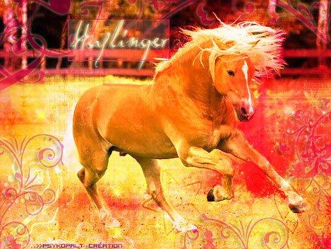 """"""" L'air du paradis est celui qui souffle entre les oreilles d'un cheval. """""""