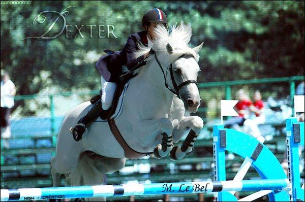 Discipline Equestres