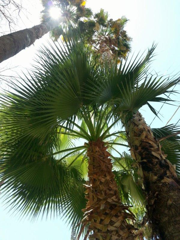 C'est tellement agréable de voir des palmiers sans arrêt ^^ !
