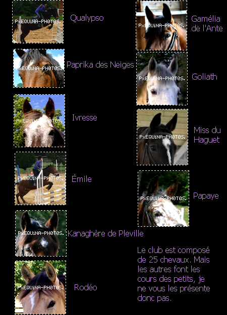 aяticle n°2 ~ ƿяésentation des chevaux  & newletter